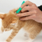 Cara Menghilangkan Kutu Kucing Paling Ampuh