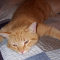 Cara Mengobati Kucing Cacingan serta ciri-ciri dan penyebabnya