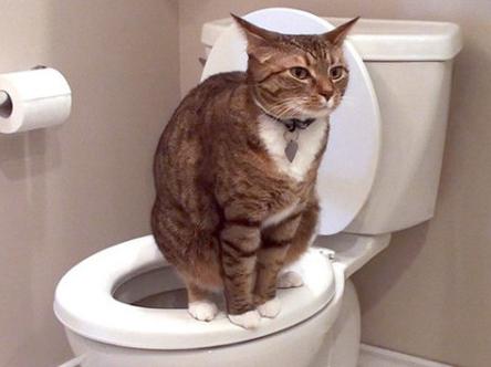 Cara Mengobati Kucing Mencret dan Penyebab kucing diare