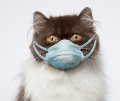 Cara Mengobati Kucing Sakit Flu dan Batuk