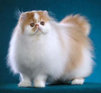 3 Tips Sebelum Membeli Kucing Peliharaan