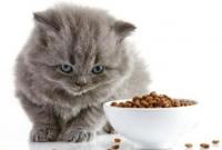 Cara Mengatasi Kucing Tidak Mau Makan