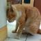 Ciri Ciri & Penyebab Kucing Stress