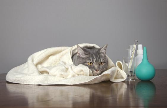 Cara Mengobati Kucing Flu : Ciri-ciri, Penyebab dan Obat