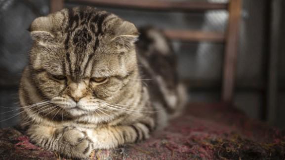 Penyebab Kucing Stress
