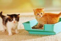Cara Melatih Kucing Buang Air di Litterbox