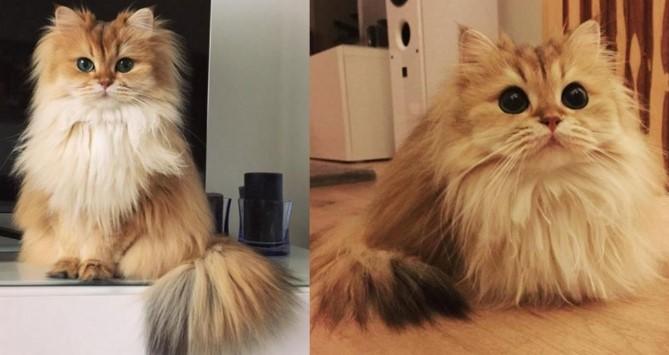 Cara Merawat Bulu Kucing