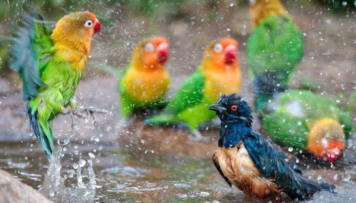 Cara Merawat Burung Kicau