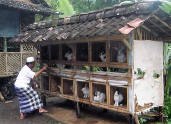 Kandang Kelinci Bertingkat dari Kayu