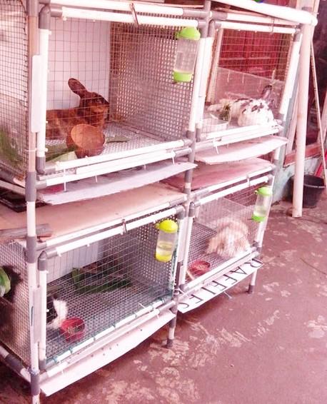 cara membuat kandang kelinci dari paralon