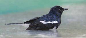 Download Suara Terapi Semua Jenis Burung