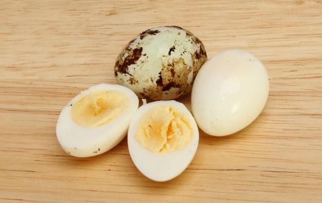 Telur Puyuh untuk Kenari