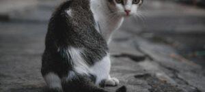 Kucing Kampung Jalanan