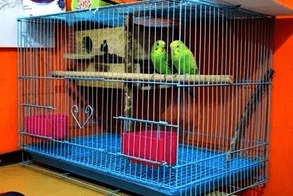 Contoh Kandang Ternak Lovebird