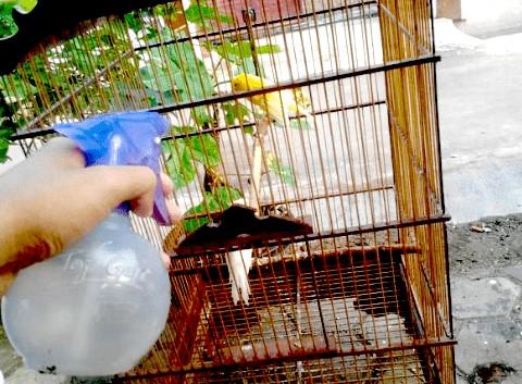 Perawatan Standar Burung