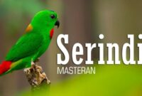 Download Suara Burung Serindit Mp3