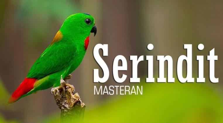 Download Suara Burung Serindit Mp3