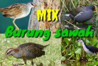 Download Suara Burung Sawah/Rawa