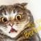 Bahaya Bulu Kucing Bagi Manusia Menurut Dokter Ahli !