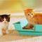 Cara Melatih Kucing Buang Air di Litterbox !