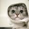 Cara Memandikan Kucing yang Baik dan Benar
