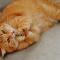 Cara Membuat Kucing Gemuk dan Sehat