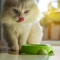 Cara Memilih Makanan Kucing Persia Agar Cepat Gemuk