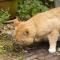 Cara Mengatasi Kucing Keracunan Paling Efektif !