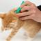 Cara Menghilangkan Kutu pada Kucing dengan Cepat (TERBUKTI!!)