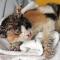 Cara Mengobati Jamur Pada Kucing (Cepat & Ampuh)
