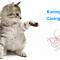 Ciri-ciri, Penyebab dan Cara Mengobati Kucing Cacingan Dengan Benar