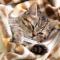 Cara Mengobati Kucing Demam (Panas) dengan Cepat !