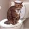 Cara Mengobati Kucing Mencret dan Kenali Penyababnya