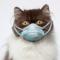 Cara Mengobati Kucing Sakit Flu atau Pilek