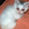Cara Mengobati Kucing Sakit Mata Tanpa ke Dokter (MUDAH & CEPAT)