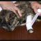 Cara Mengobati Luka Pada Kucing Paling Cepat & AMPUH !