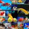Jenis Ikan Koki dan Gambarnya