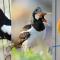 Download Kumpulan Suara Burung Mp3 Untuk Masteran