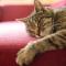 Penyebab Kucing Tidur Terus Menerus yang Harus Kamu Ketahui !