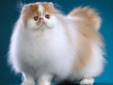 3 Tips Sebelum Membeli Kucing