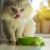Cara Memilih Makanan Kucing Persia