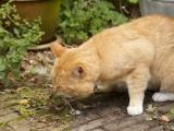 Cara Mengatasi Kucing Keracunan