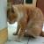 Ciri & Penyebab Kucing Stress