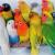 Jenis Burung Lovebird Termahal