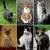 Jenis Kucing Terpopuler