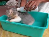 Rekomendasi Shampoo Kucing