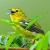 Suara Burung Sirtu